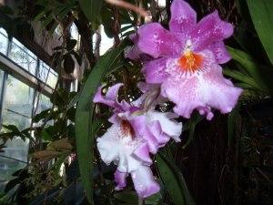 botanic christmas 2011 112