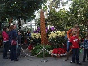 botanic christmas 2011 308-1