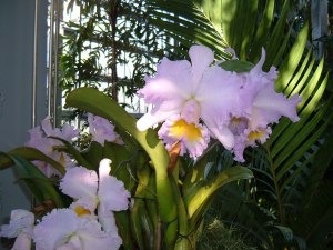 botanic garden christmas december 11 20140