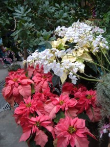Botanic Gardens 12-25-2009 185