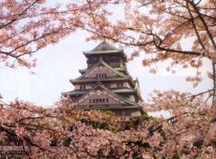 osaka_castle_cherry_blossom_tokyo
