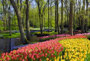 tulipani-keukenhof