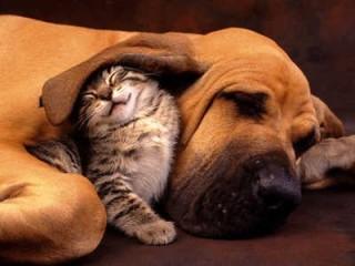 cani-gatti-animali-domestici