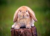 coniglio-abbandonato