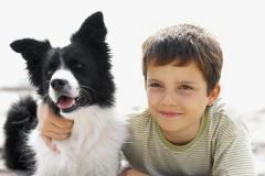 leggi-sulla-tutela-degli-animali_8573a49210a897066b744b068c910e25