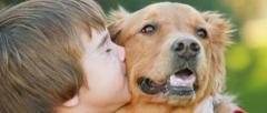 meno-abbandoni-cani--470x200