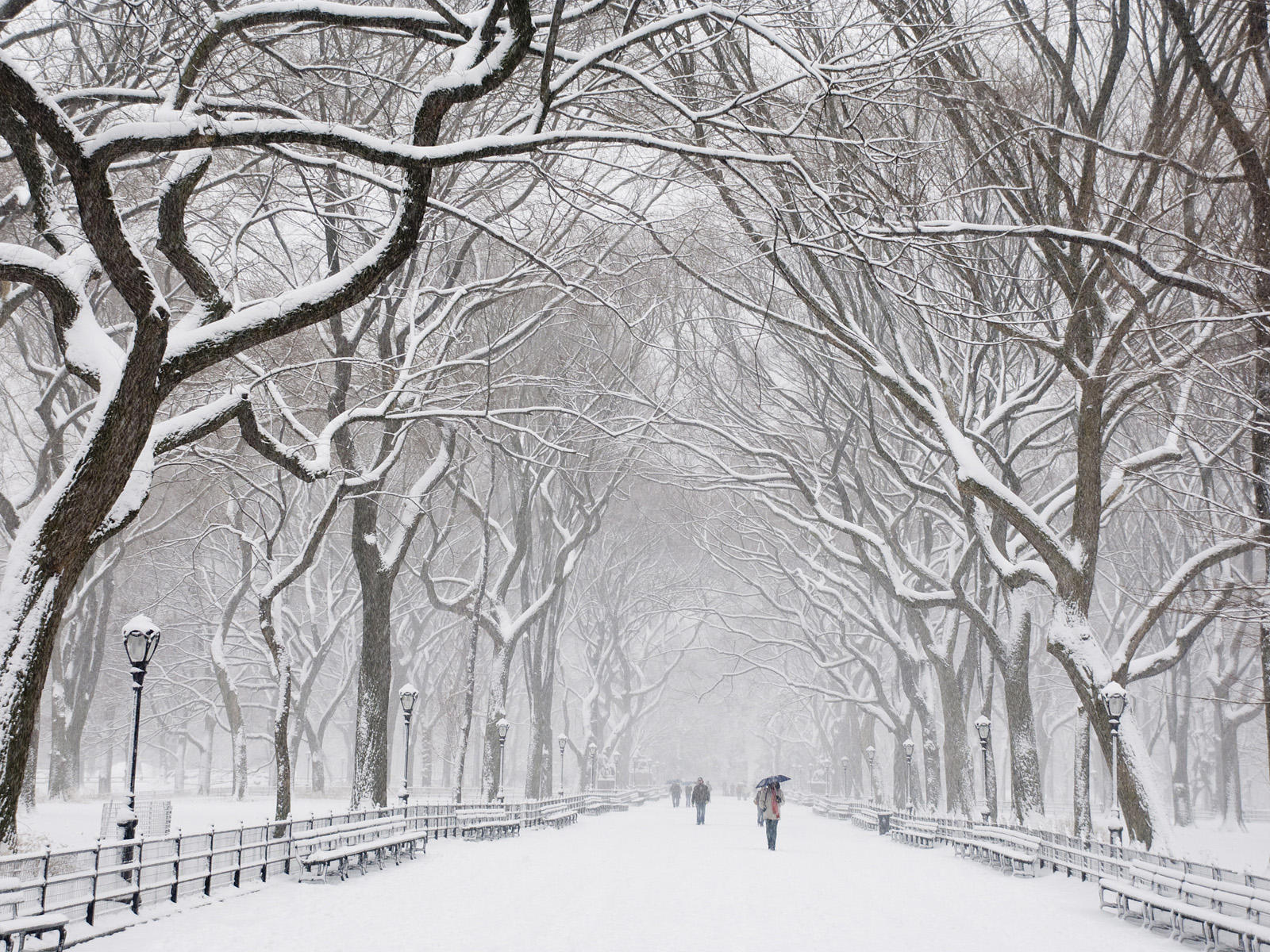 Snow Covered Trees Central Park