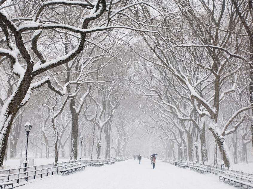 https://kathykieferblog.files.wordpress.com/2013/12/snow-covered-trees-central-park-new-york.jpg?w=846&h=634