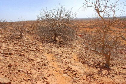 Effects-of-climate-change-in-Mandera.
