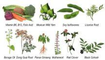 botanicals-2011