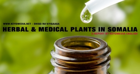 Herbal__Medical_Plants_in_Somalia-620x330