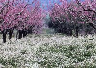 04_primavera_big