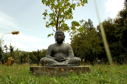 ritiro-zen-la-forma-informale-023
