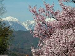 stagione_primavera_052