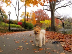 Autumn-in-New-York-614x461