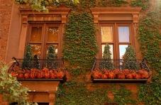bill_cunningham_pumpkins_102608