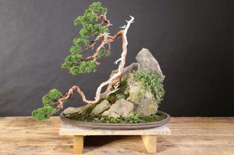 full_6870_208749_SingleBonsai_1