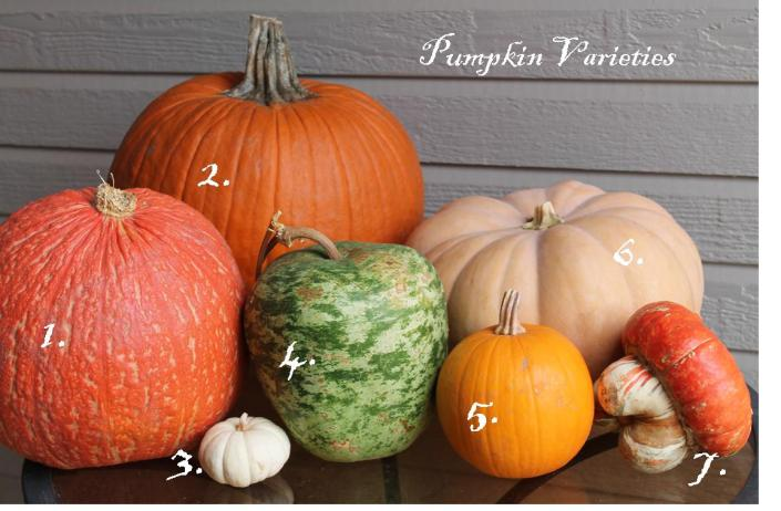 pumpkin-varieties